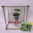 Self Watering Planter & Tabletop Greenhouse