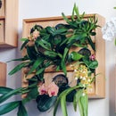 Vertical Orchid Planter