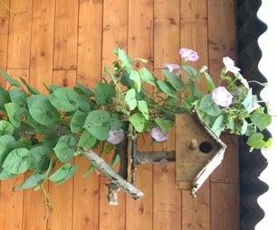 Birdhouse Plant Climber