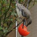Bird Distractors