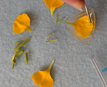 Place Your Petals