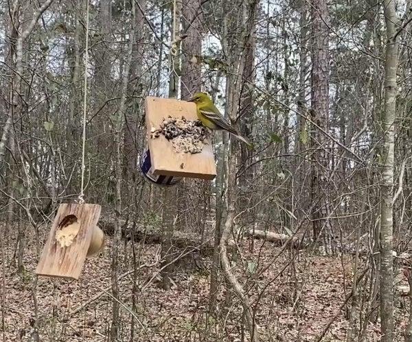 Dollar Store Peanut Butter Bird Feeder