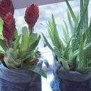 DIY jean planters - recycled