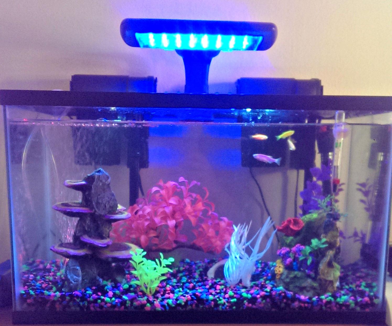 Setting Up a Fish Tank