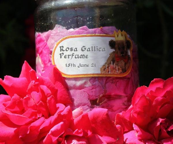 Making Rose Petal Perfume  - the Red Rose of Lancaster
