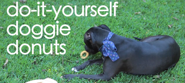 DIY: Dog Treats