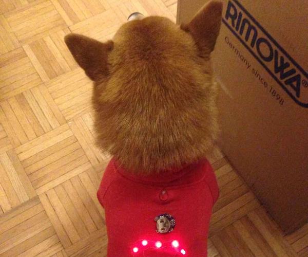 A Light Up Pet Hoodie