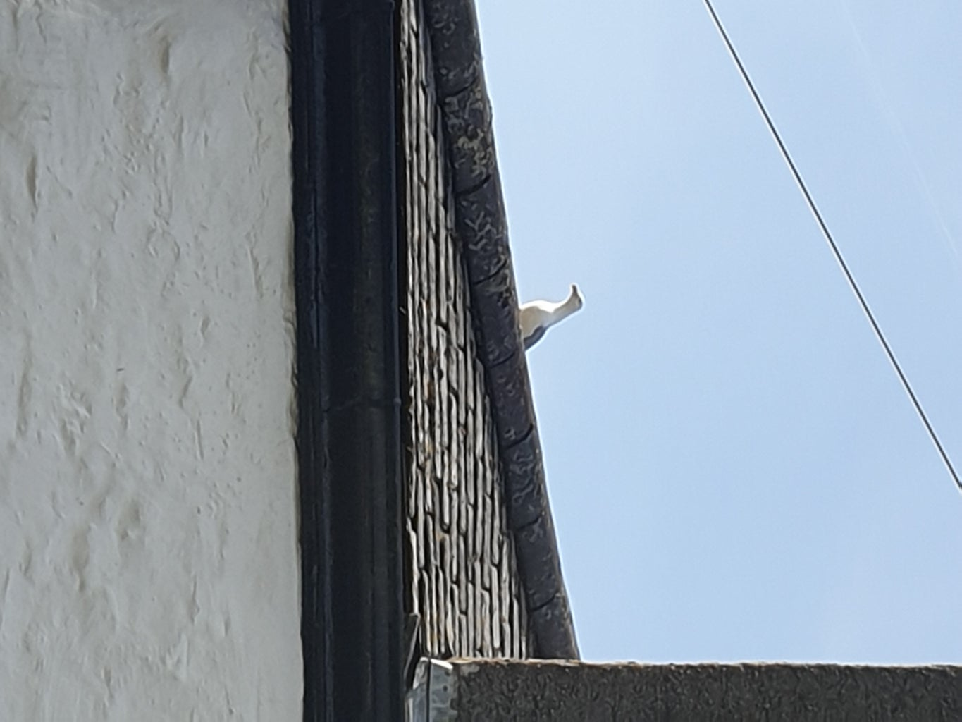 How to Use Seagull Repellents in Your Garden
