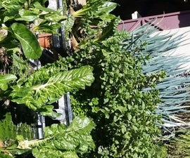 Solutions to Algae Problems in Hydroponic Systems