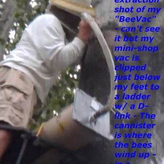 Me vac'ing bees from a tree.jpg