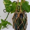 Custom Plant Pots