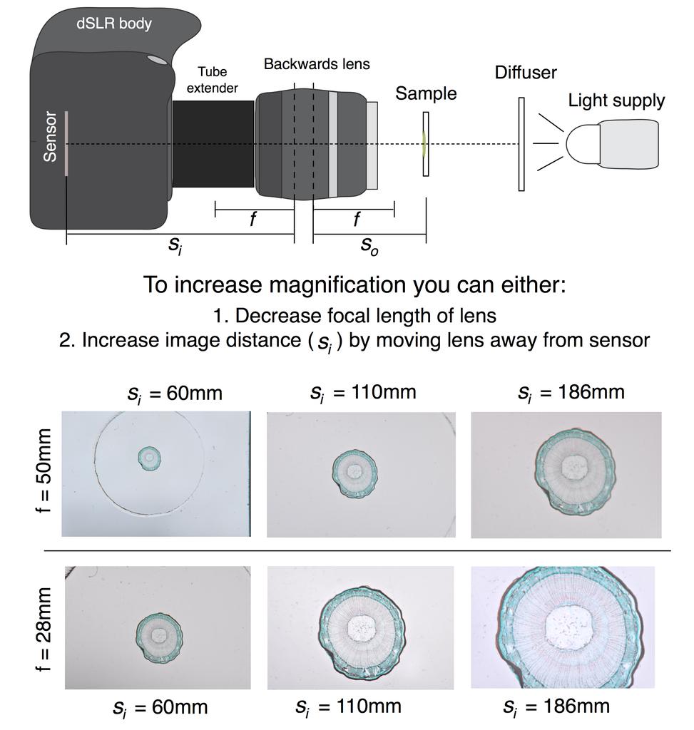 Modeling Microscopes With Ray Optics