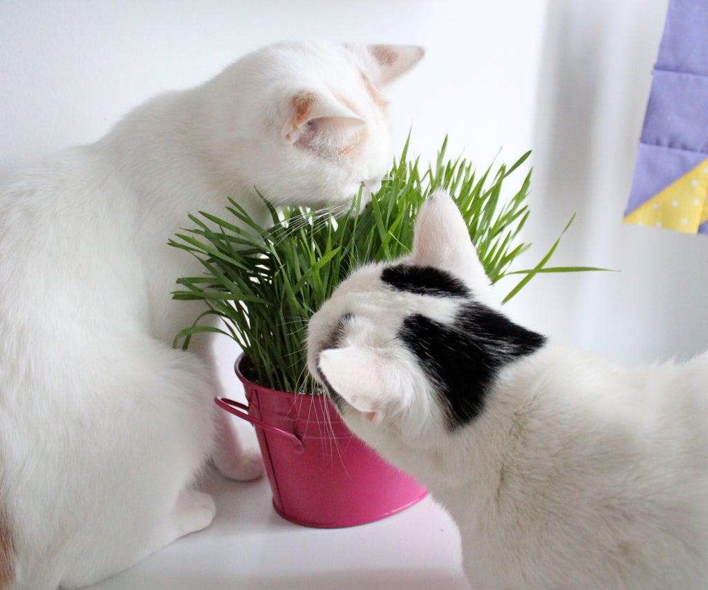 Auto lucy cat Etsy