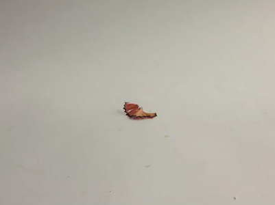 How to Use Pencil Shavings to Draw