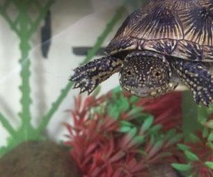How to Keep Turtles