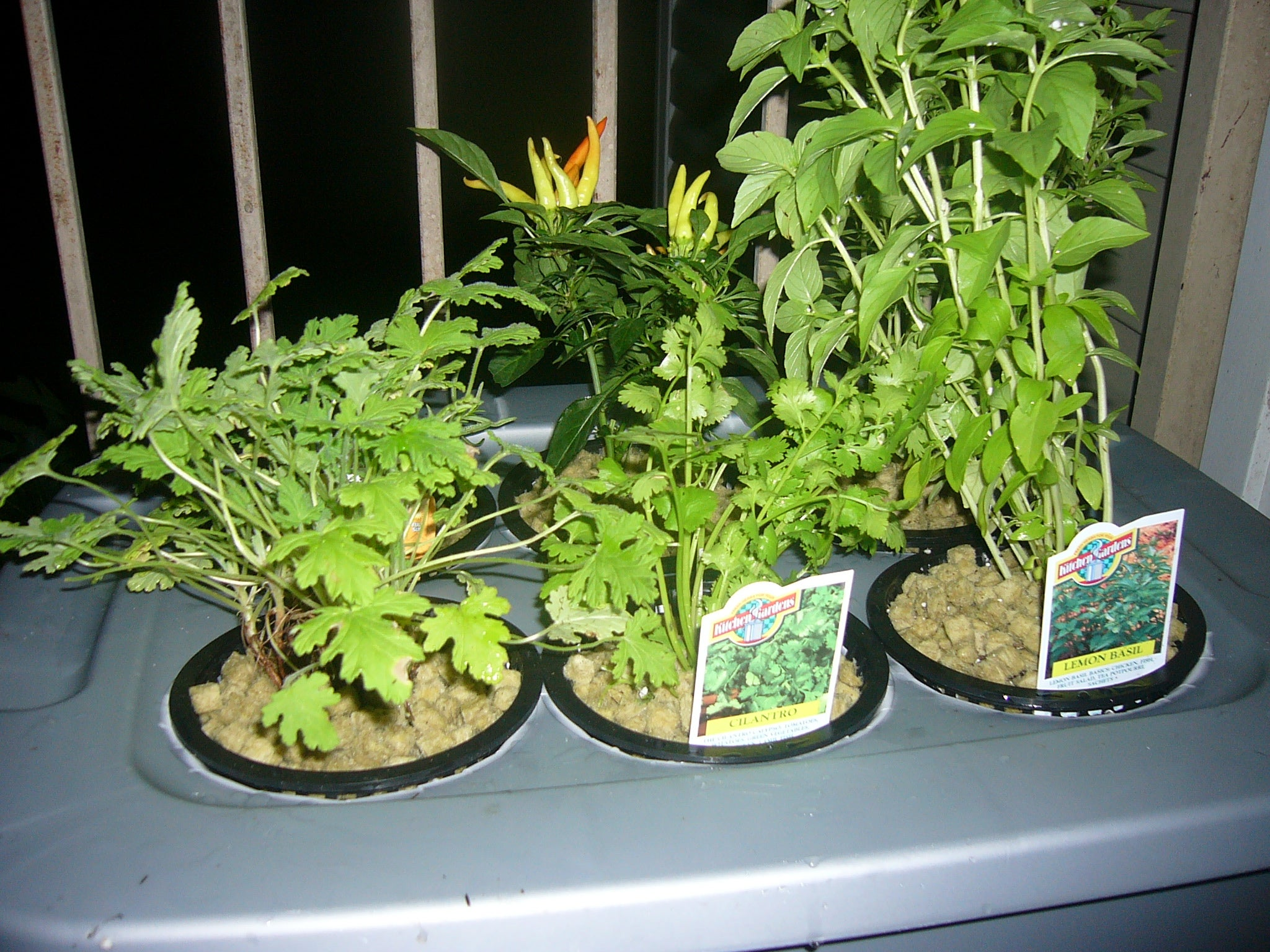 Hydroponics At Home And For Beginners 11 Steps With Pictures Instructables
