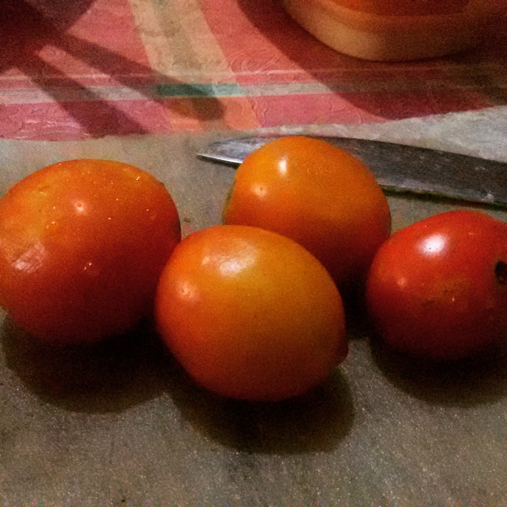 Tomato Glory.