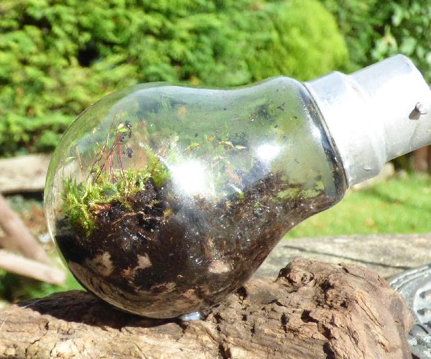 Miniature Terrarium in a Light Bulb