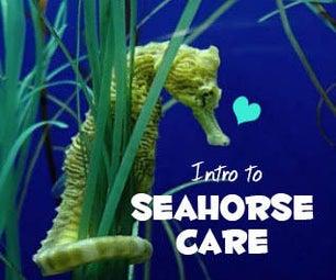 Intro to Seahorse Care