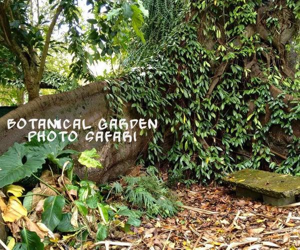 Botanical Garden Photo Safari: Bagging the Best Shots