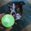 Glow-in-the-Dark Dog Ball UV Recharger