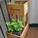 Home Garden With Recycled Wine Boxes
