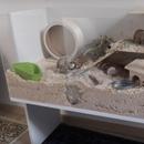 DIY Hamster Cage