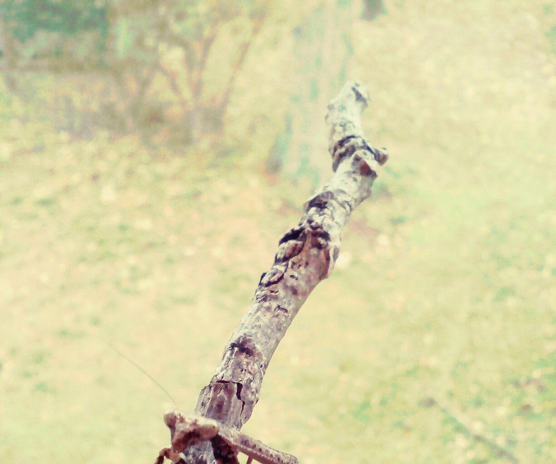 Make a Mantis Terrarium in a Pinch