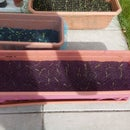 Make a seedling net from a body pouf