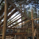 $100 cabin made of Black Locust and old billboard