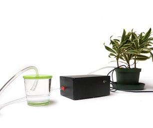 Self-Watering Plant
