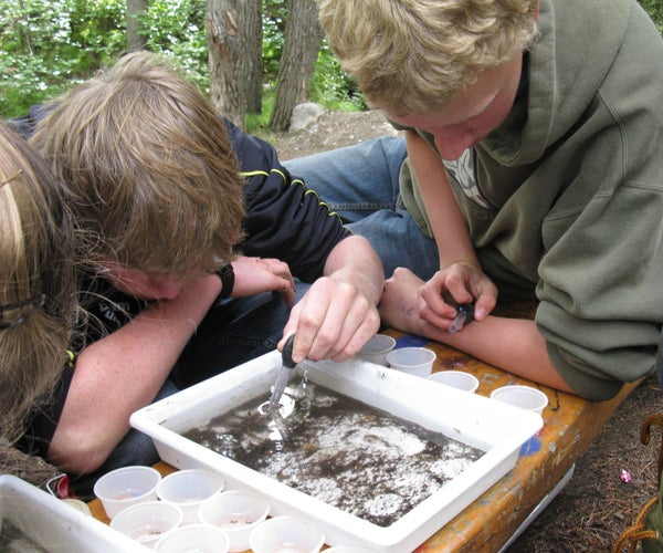 Sucker-Uppers for Collecting Aquatic Invertebrates
