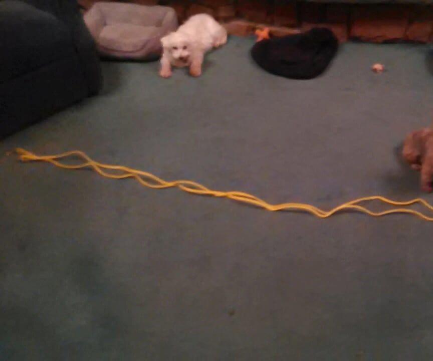Make a Pet Leash of Any Length