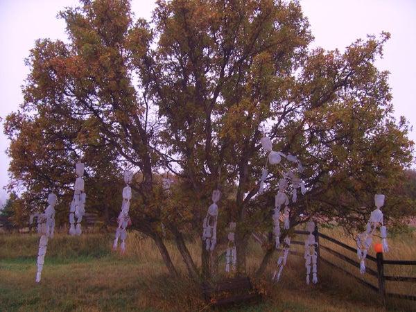 Skeleton Hangin' Tree