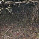 Haggis hunting