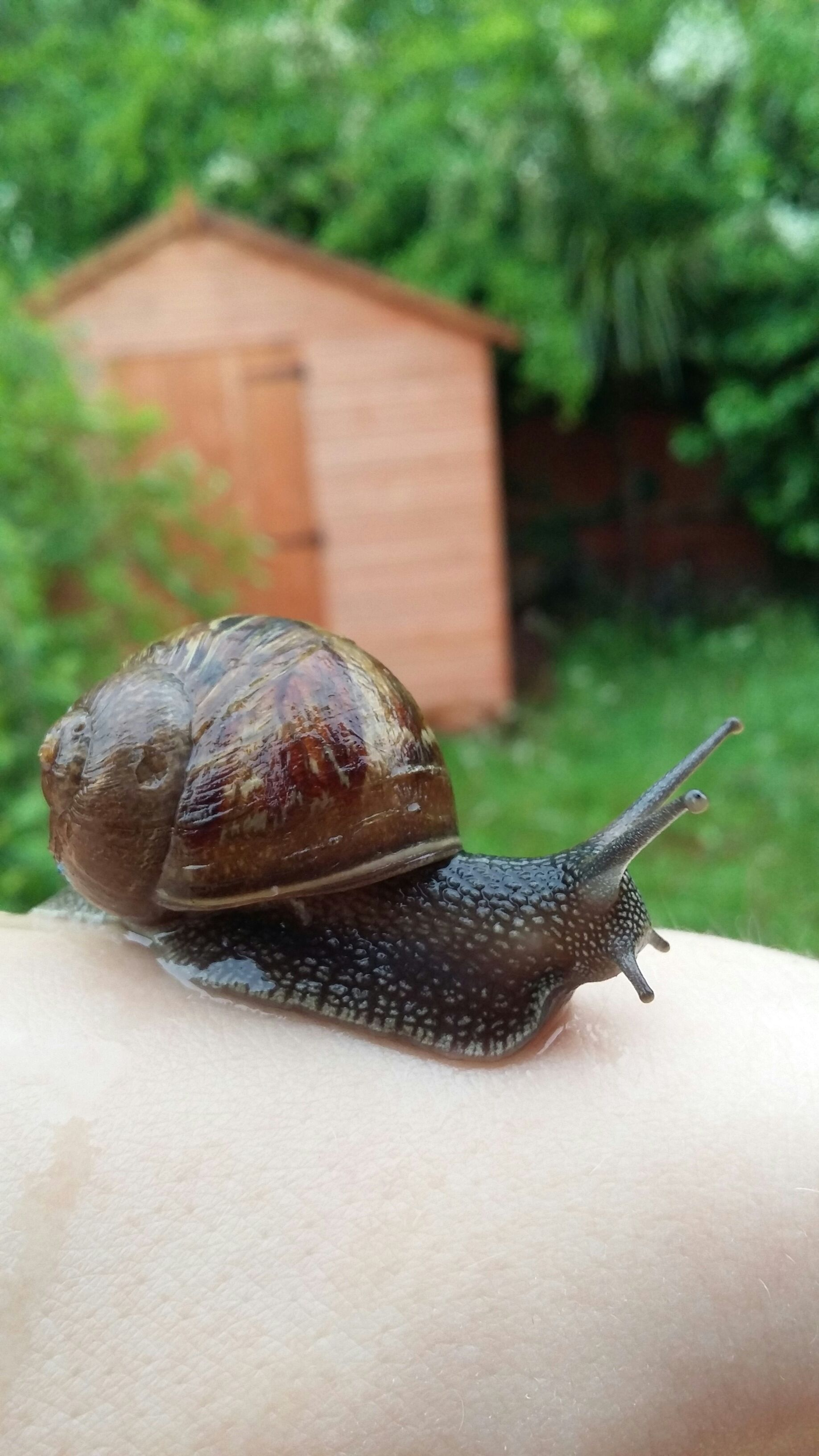 Snail Care And House 7 Steps With Pictures Instructables