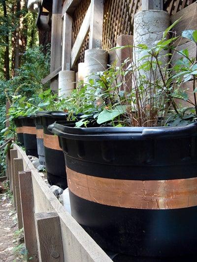 Building Slug-Proof Planting Barrels