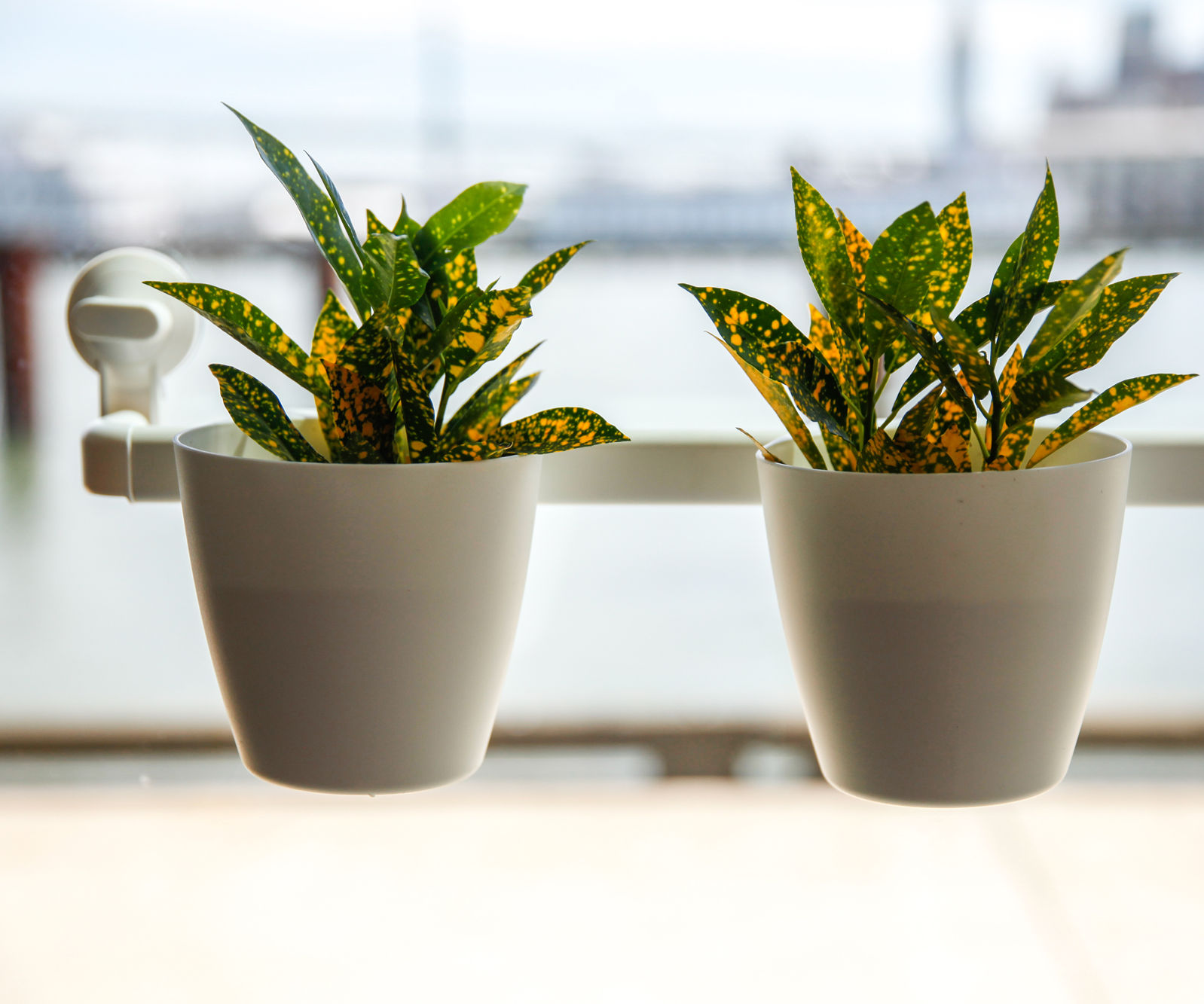 """Window Planter 9/"""" x 3/"""" x 3/"""" Suction Cup attaches to window"""