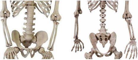 Hack and Repair Plastic Halloween Skeletons