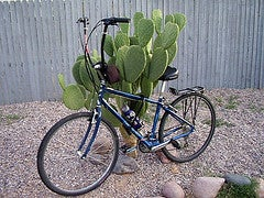 Camping: on a Bike & Low Budget!