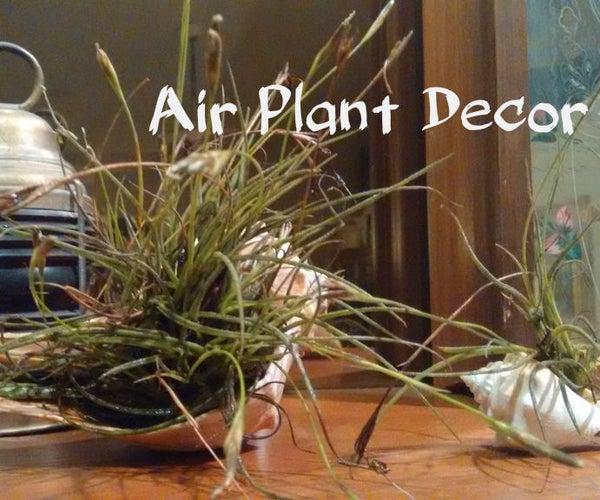 Air Plant Decor