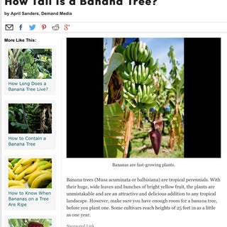 How to Harvest Bananas
