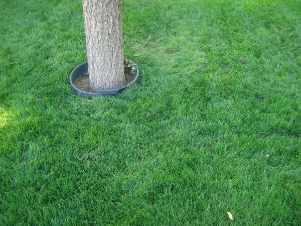 How to Plant Water Saver RTF Grass Seed