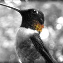 Create A Color Accented Photo In Photoshop