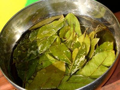 Soak Pimento Leaves in Water