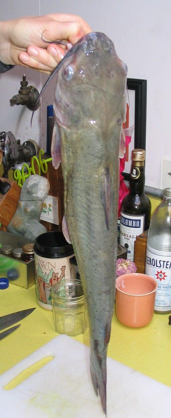 Skinning and Filleting Catfish