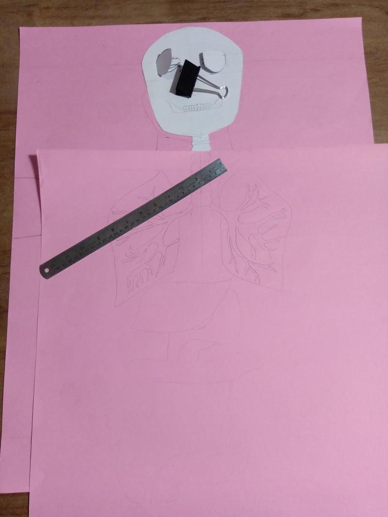 Layer 5 : Abdominal System