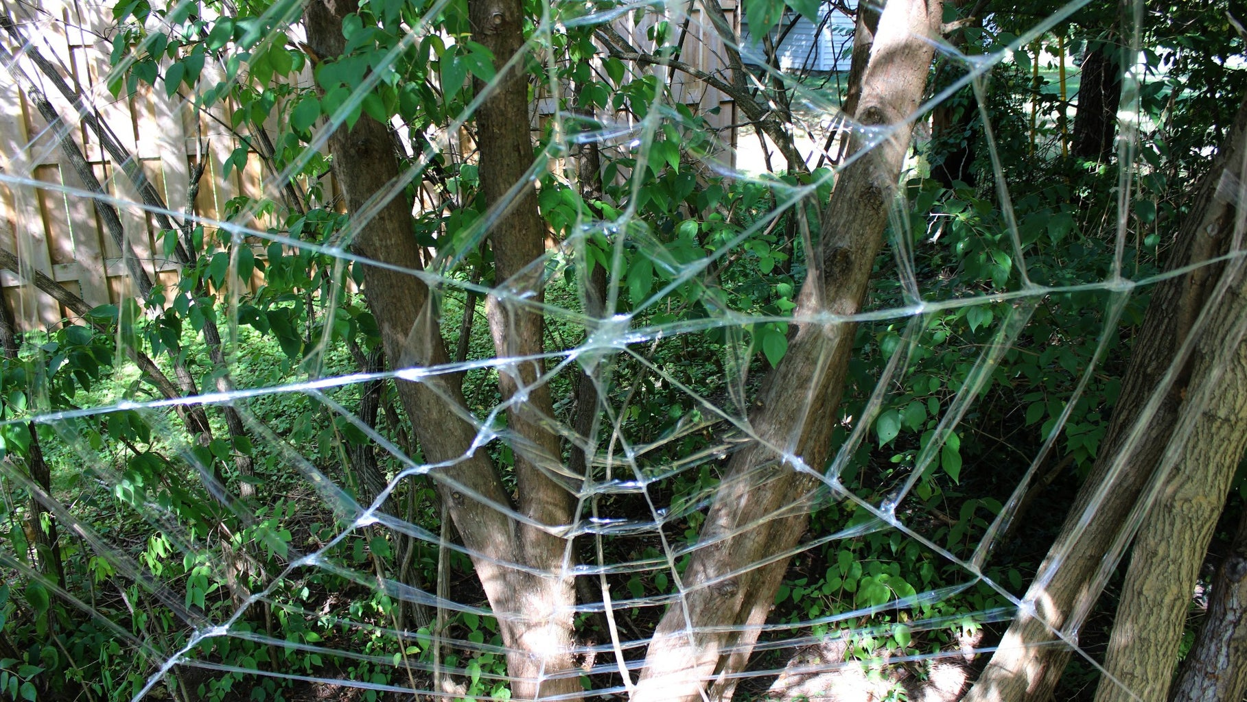 Finished Spider Web