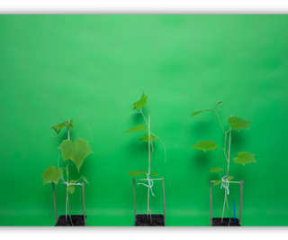 Does Music Affect Plant Growth?