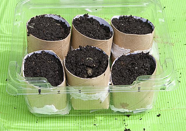 Mini seedling greenhouse